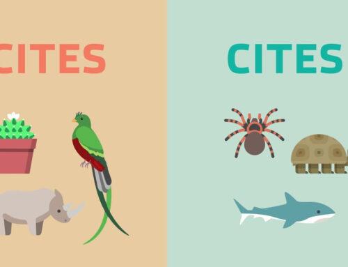 Chứng chỉ CITES là gì?